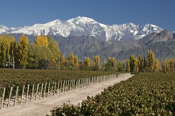Excursión de un día a Mendoza desde...