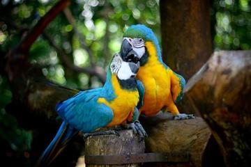 Guira Oga Bird Park Admission with Iguazú Falls Upgrade