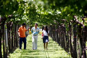 Private Wine Tasting and Vineyards Tour from Mendoza