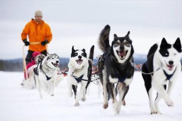 Sled Husky Experience From Ushuaia