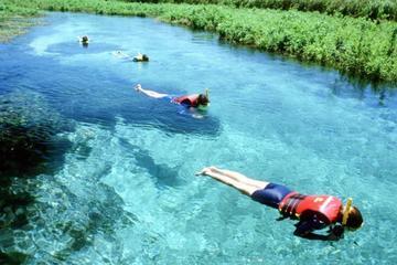 Sucuri River Snorkel Tour from Bonito