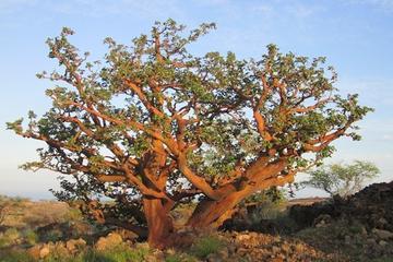 Besuch zu Big Island Dry Forest Preserve