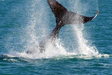 Crociera con avvistamento delle balene e tour di un giorno di