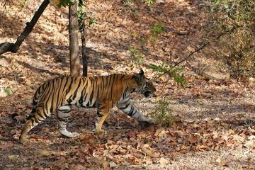 05 Days Wildlife Tour - Bandhavgarh