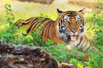 6-Night Golden Triangle and Ranthambore Tour