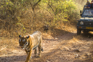Visite privée sur 6 nuits du Triangle d'or et safari au parc de...