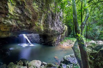Springbrook and Tamborine Rainforest Tour Including Natural Bridge...