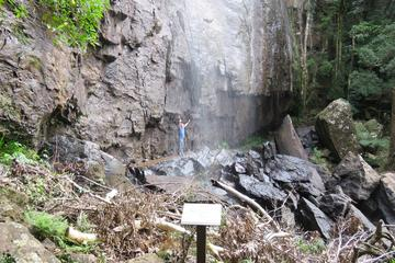 Springbrook Mountain Day Trip from Brisbane Including Antarctic Beech...