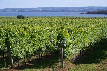 Book Small-Group Annapolis Valley Wine and Food Tour from Halifax on Viator