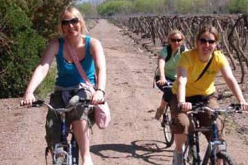 Cykeltur i vinlandet omkring Mendoza