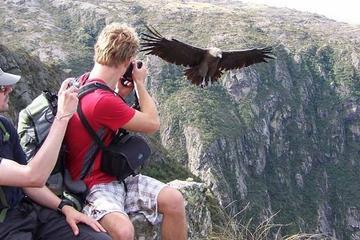 Mendoza-trekkingtur i Cordón del Plata med argentinsk Asado-frokost