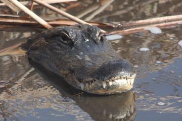 Visite en petit groupe: aventure d'une journée dans les Everglades...