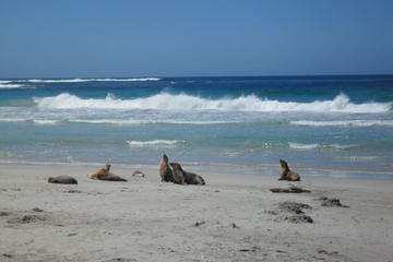 Dagtrip naar Kangaroo-eiland vanuit ...