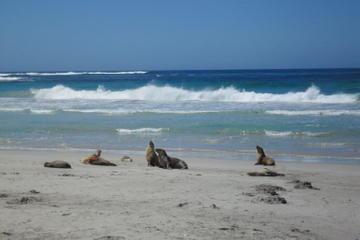Isla de los Canguros: visita de un día desde Adelaida