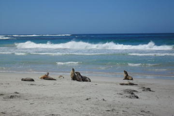 Kangaroo Island in a Day Tour from...