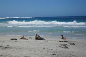 Kangaroo Island på en dag - tur fra Adelaide
