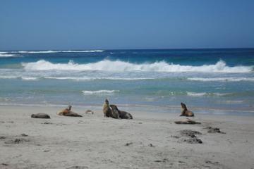 Tagesausflug zur Känguru-Insel ab Adelaide