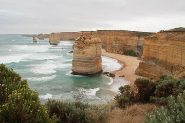 Melbourne Combo: Great Ocean Road Day Trip and Phillip Island Day Trip from Melbourne