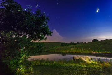 Croisière privée en soirée pour observer les lucioles depuis Bohol