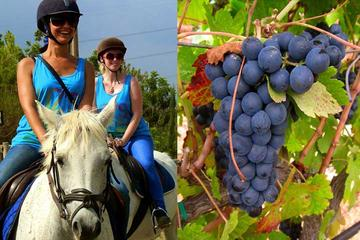 Horseback Riding Tour in a Natural Park and Wine tasting in Penedés