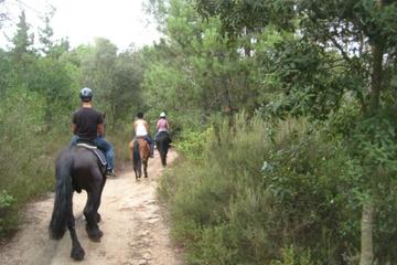 Paseo a caballo en Parque Natural...