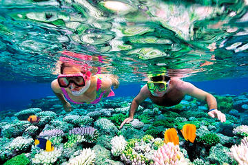 Classic Reef Snorkel