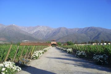 Aquitania and Cousino Macul Vineyards From Santiago