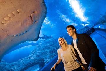The Aquarium of Western Australia (AQWA): General Admission Ticket