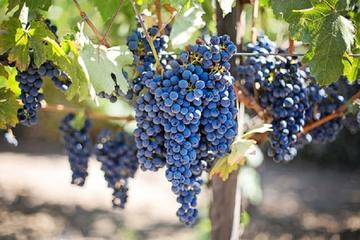 Book Willamette Valley Wine Tasting Tour from Eugene on Viator