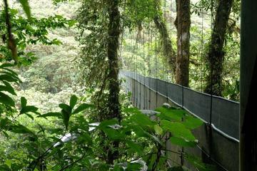 Biologisches Reservat und Schmetterlingsgarten von Monteverde...