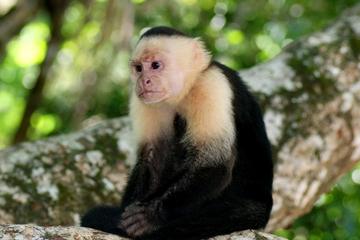 Excursão de 11 dias de San Jose: Monteverde Cloud Forest e...