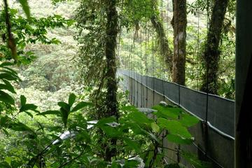 Reserva Monteverde y jardín de mariposas desde Guanacaste