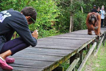 Orangutan Tour Liveaboard  3 days 2 nights