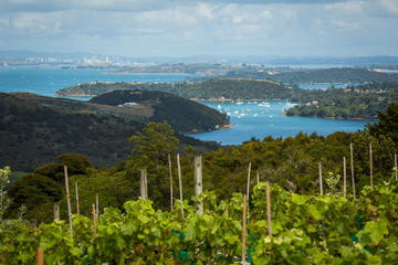 The Best of Waiheke: Ziplining, Wine Tasting and Vineyard Lunch