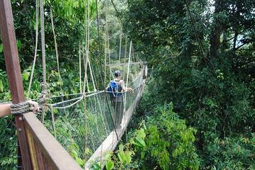 4-Day Jungle Experience in Taman Negara from Kuala Lumpur