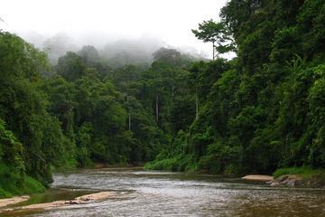 A Date With Nature At Ulu Muda Rainforest