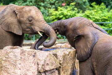 Excursion d'une journée au sanctuaire pour éléphants orphelins et à...