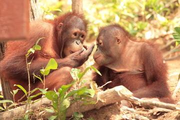 visite-de-l-ile-d-orangutan