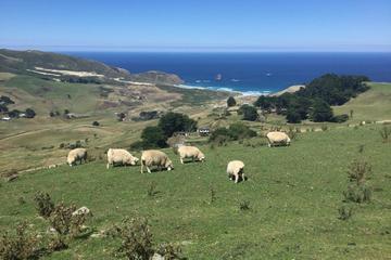 Dunedin, Otago Peninsula and Coastal...