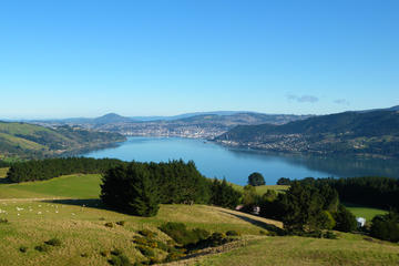 Otago Peninsula Scenic and City Highlights Tour