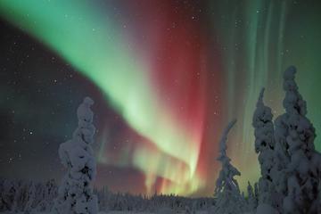 Northern Lights Snowmobile Sleigh Ride