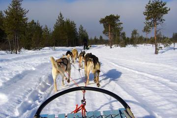 Snowmobile Safari to a Husky Farm with Husky Safari