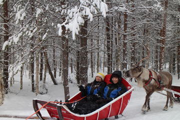 Snowmobile Safari to Reindeer Farm with One Hour Reindeer Safari