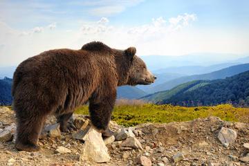 Bear Sanctuary Bran Castle and Brasov...