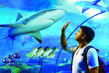 Cairns Aquarium Family Tickets