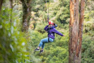 Rotorua Forest Zipline Canopy...