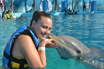 ATV Adventure and Dolphin Encounter Combo Tour