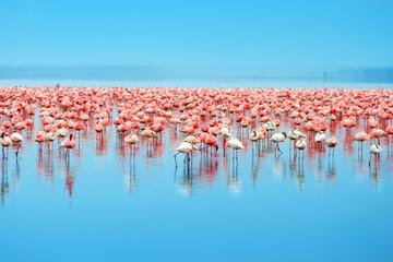Day Trip to Celestun: Flamingos, Mangrove Boat Ride and Tampeten...
