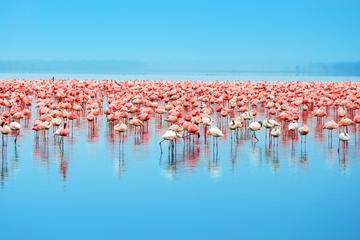 Tagesausflug nach Celestun: Flamingos, Bootstrip durch die Mangroven...