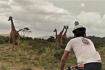 1 day Walking and Bike Safari in ...